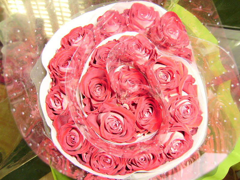 bday passion roses before opening up