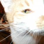 Ok so the kitty decided he liked me camera as much as I do