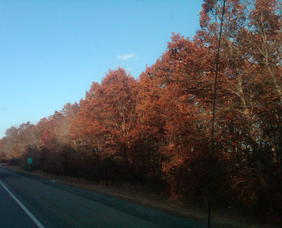 I just love the Fall here in Mass, gorgeous colors in the trees, so breath taking a times.
