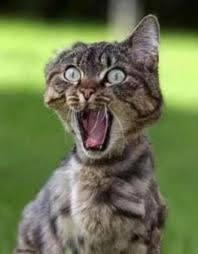 cat panick