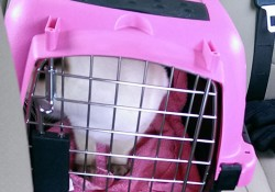 Cat Surgery – #Daisy Is a Trooper!