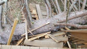 March 3 2018 - Fallen Tree